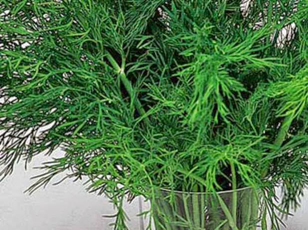 şifalı bitkiler,doğal bitkiler,şifalı doğal bitkiler,sağlıklı beslenme,sağlık,sağlıklı yaşam,sağlıklı bitkiler,şifalı bitki
