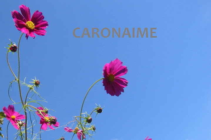 caronaime