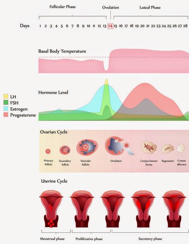 korkea estrogeenitaso oireet