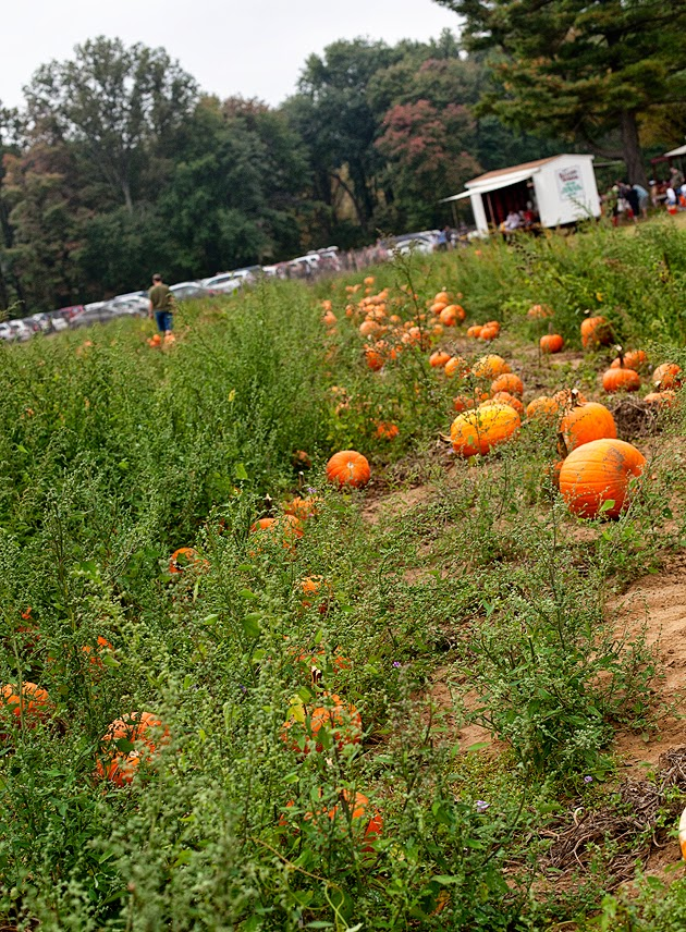 pumpkin picking in new jersey