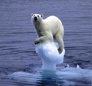 polar bears global warming funny animal