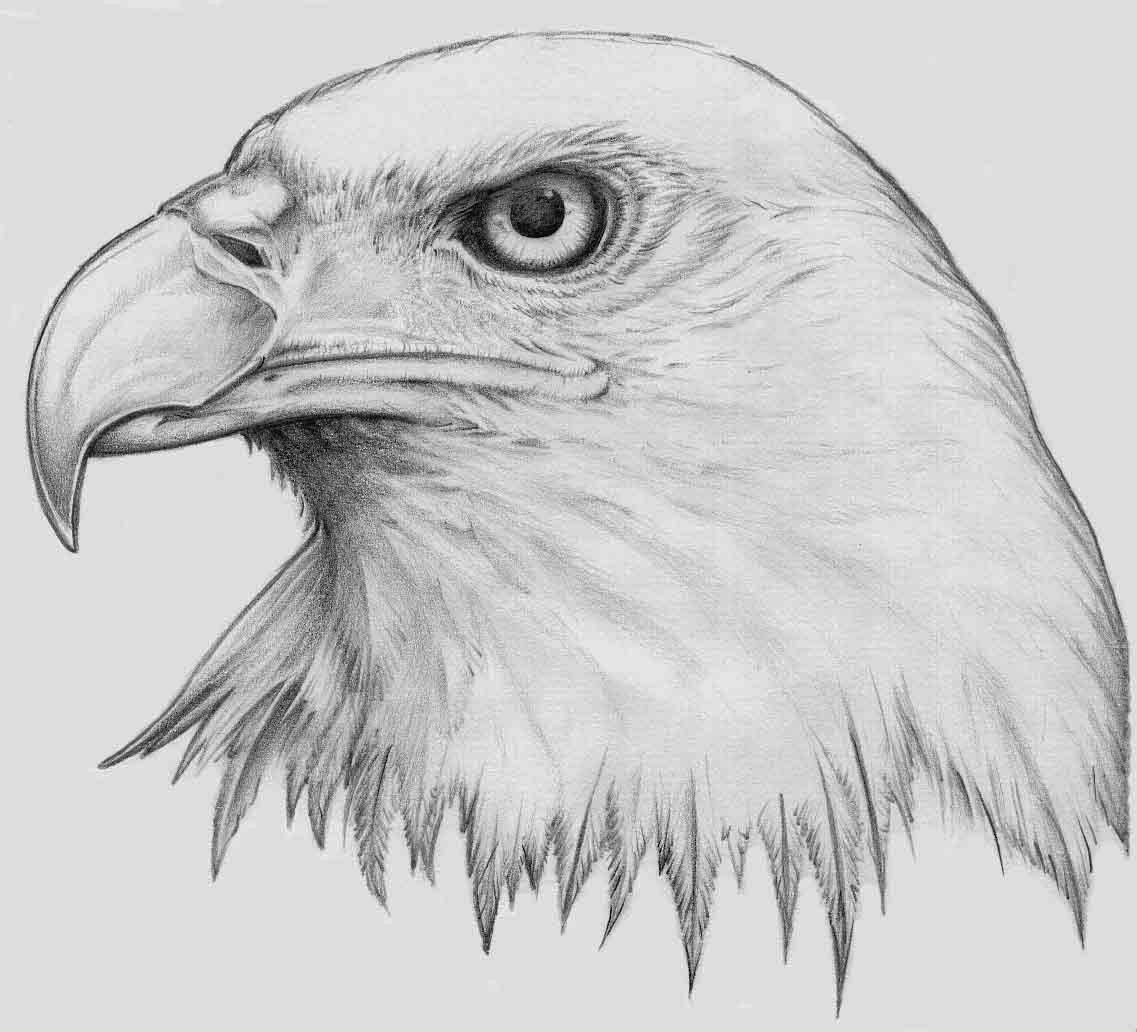 How To Draw A Bald Eagle Step By Car Tuning