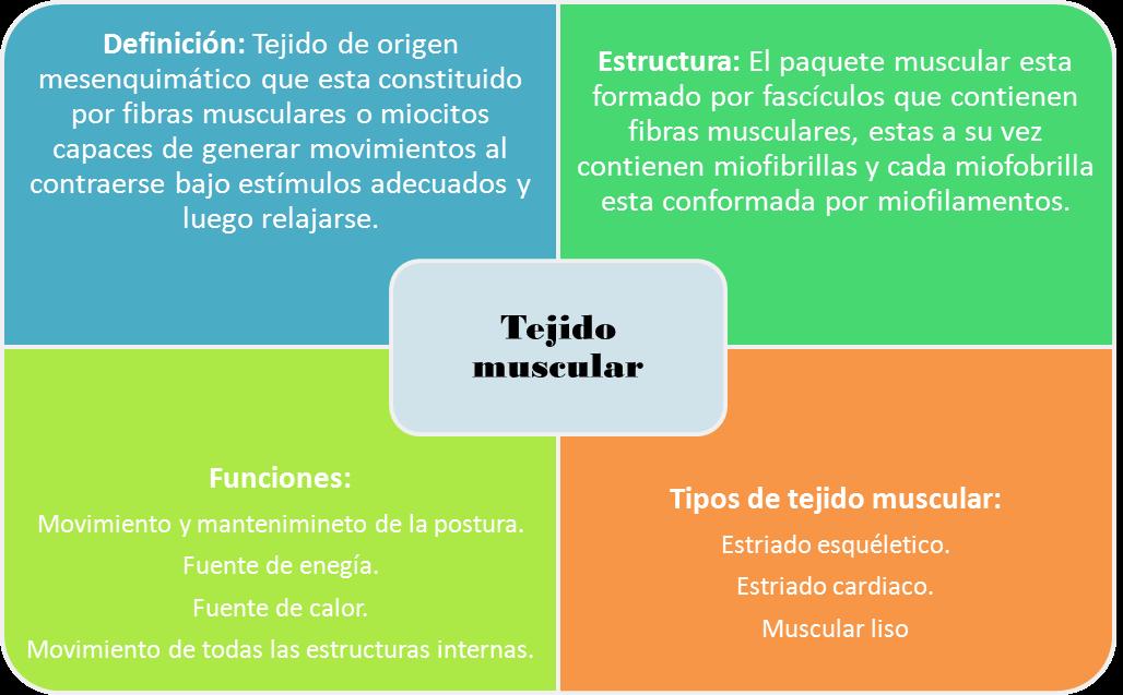 Educación Ambiental y Ecología: Mapa conceptual: tejido Muscular