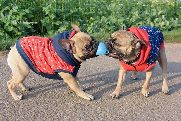 Selbstgenährte Hundejacken