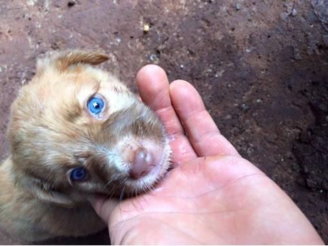 Perritos rescatados en la selva 9