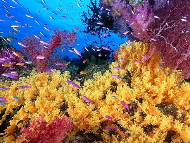 أجمل الأسماك الاستوائية الملونة   - صفحة 2 Colorful-tropical-fishes-02