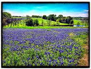 Spring has Sprung in Texas
