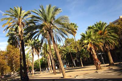 Palms along Rambla del Raval in Barcelona