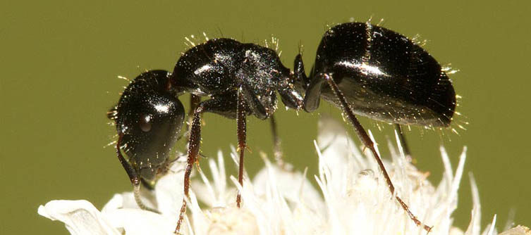 Boletín Sociedad Andaluza de Entomología Vol. 20