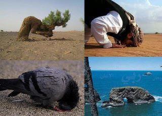 Allah-Pak-Ka-Mojeza-Photo