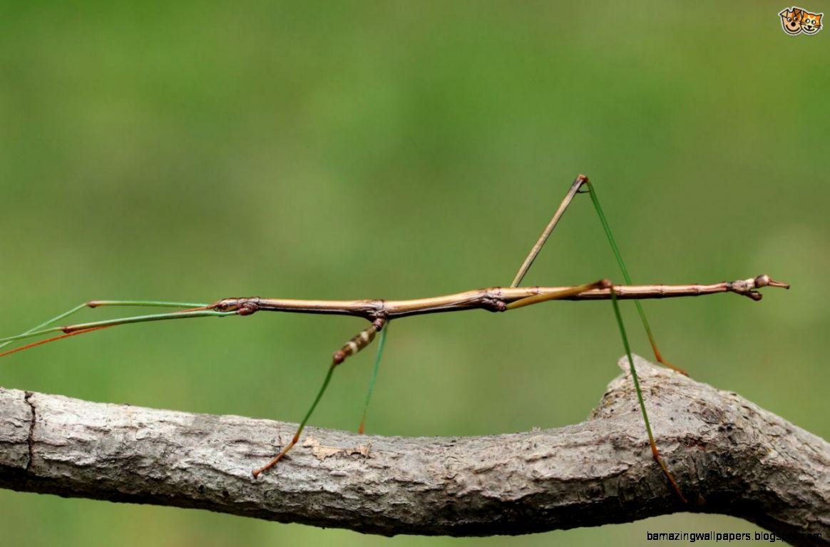 Stick Insects   Do They Make Good Kid39s Pets  Pets4Homes