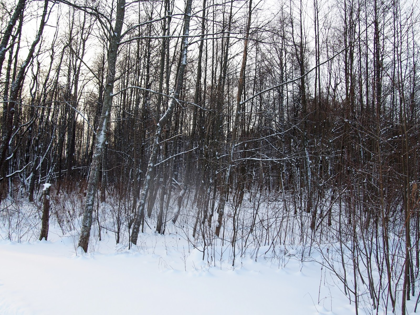 Talvi Helsingin puistoissa on ihana lumisine metsikköineen!
