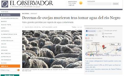contaminación algas tóxicas río Negro, Uruguay. Muerte de ovejas.