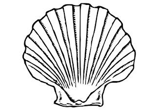 Etiquetas: Conchas y Coral