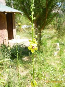Cabaña en Primavera Verano, Libre de Agrotoxicos.