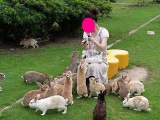surga para kelinci