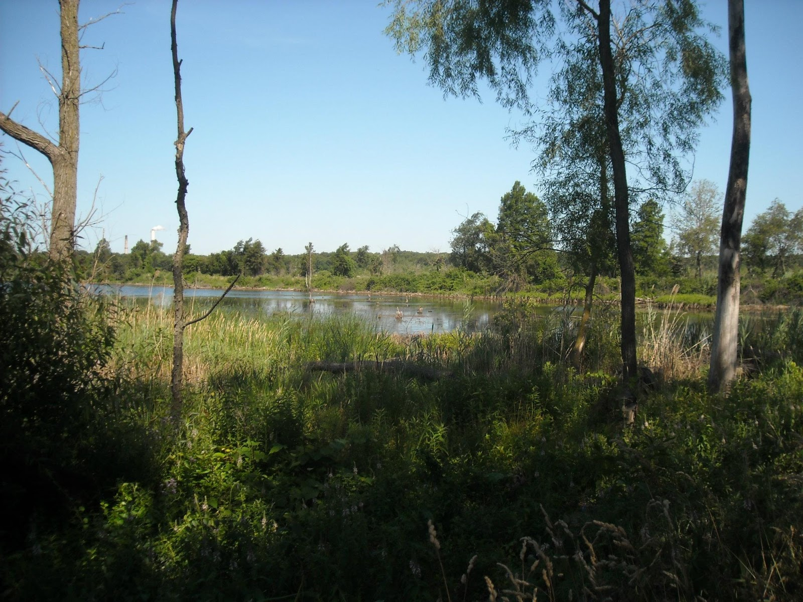 figure 6 a fen in the indiana dunes region