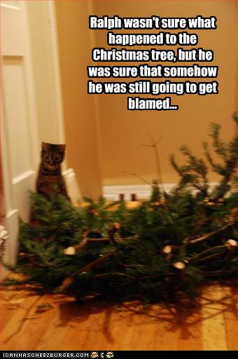 Funny Christmas Tree Meme : Justacargal hump day humor lol catz