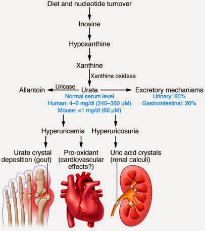 alternative medicine gout definition gout hip joint home remedies for pseudo gout