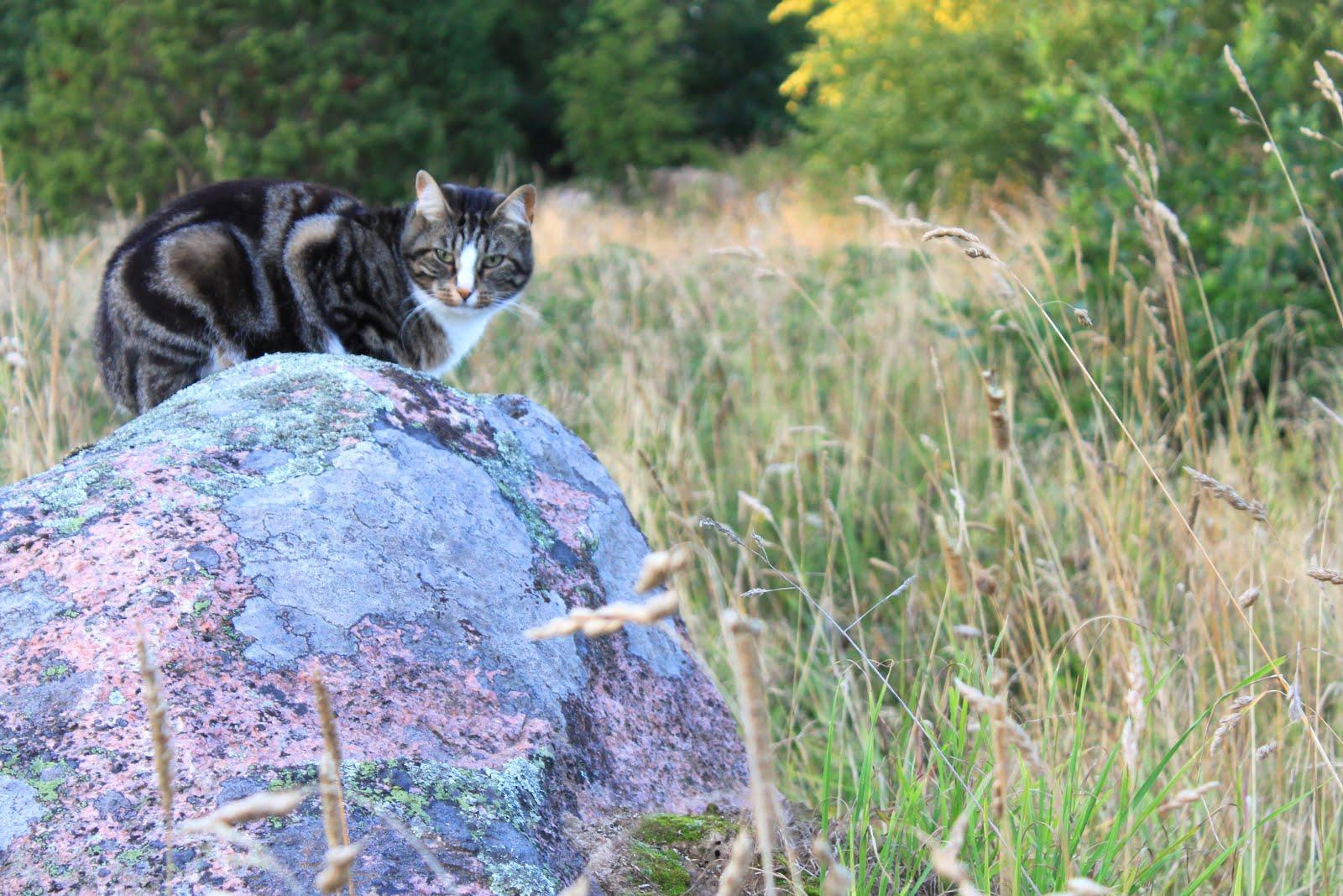 Katten Ulla