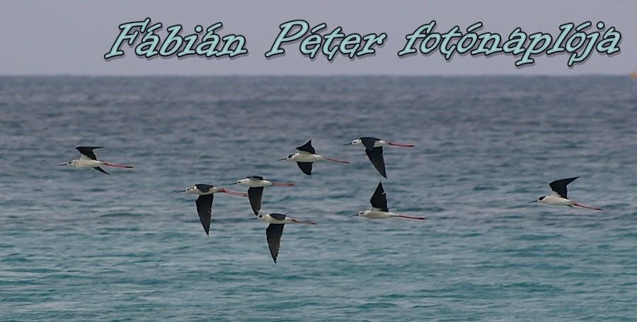 Fábián Péter fotóblogja