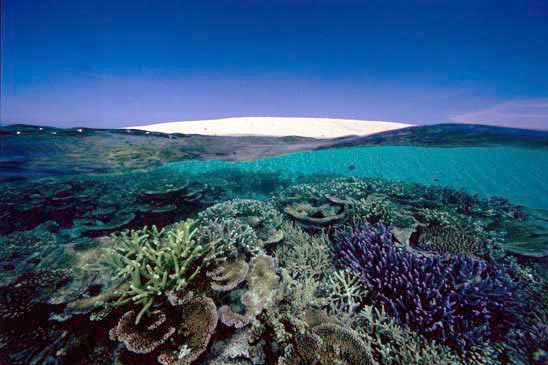 Sand Cay and Coral, Great Barrier Reef, Australia