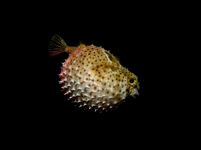 New top 10 most poisonous creatures on our planet 10 photos for Fish ball with roe