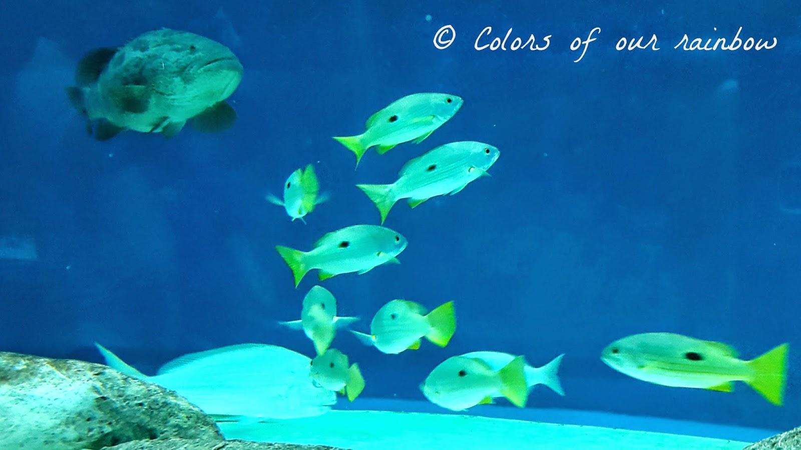 Sharjah Aquarium