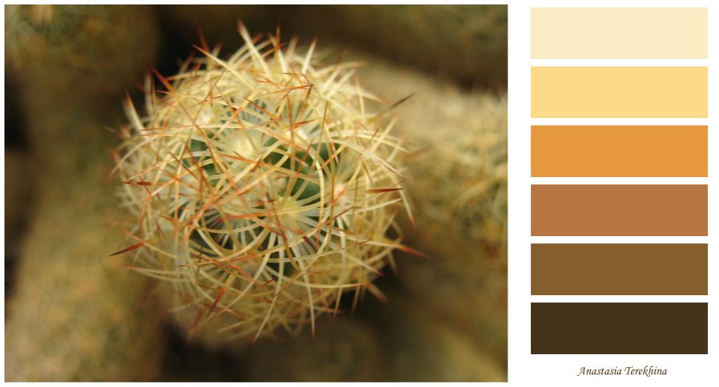цветовая палитра кактусы