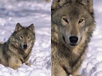 Tempat belajar Fotografi hewan