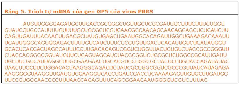 Trình tự mRNA của gen GPS của virus PRRS
