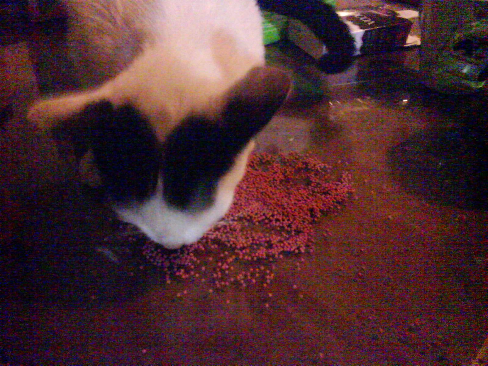 10 Mats Vs 12 Mata Ryokan Kucing Betina Habis Kawin A