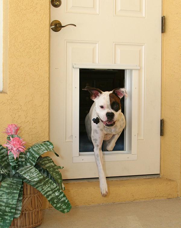 What Is An Electronic Pet Door?