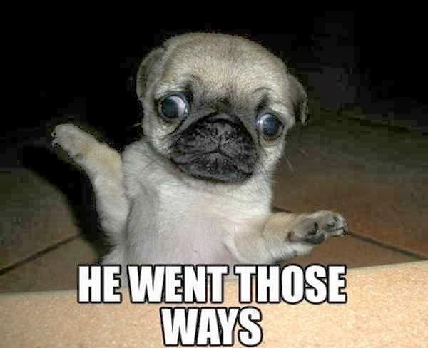 30 Funny animal captions - part 19 (30 pics), funny puppy with crossed eyes