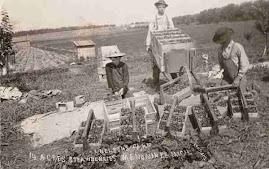 MENOMINEE HISTORY: Nelson's Farm
