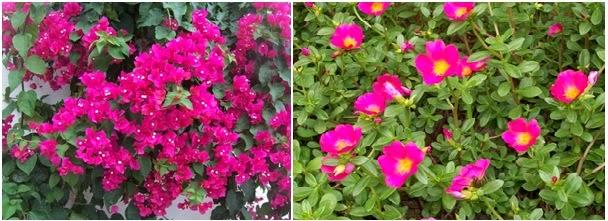 Nepaflor jardins com pouco uso de gua - Plantas de exterior resistentes todo el ano ...