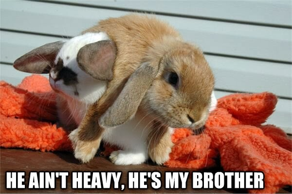 30 Funny animal captions - part 19 (30 pics), bunny picture with caption, he ain't heavy he's my brother