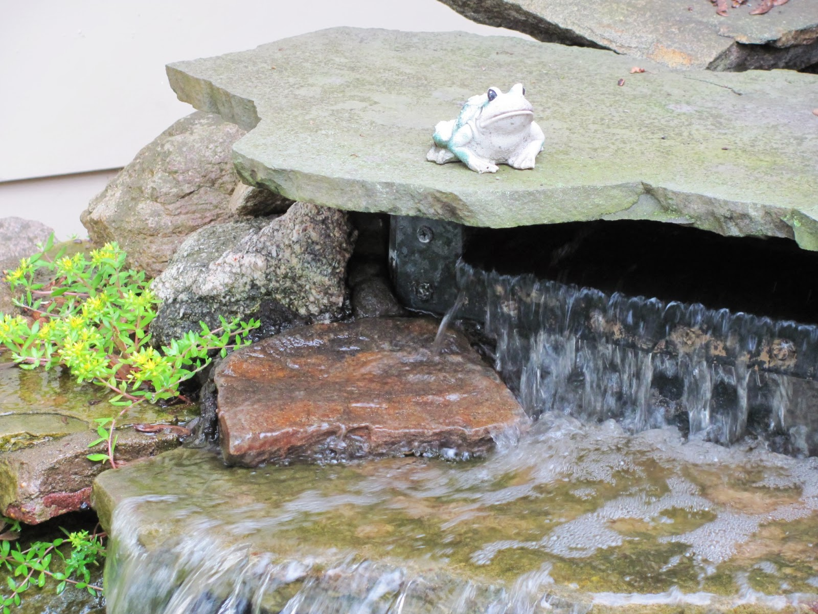 Frog sits on the top rock of our front fountain, where he sat sentinel for years before the move