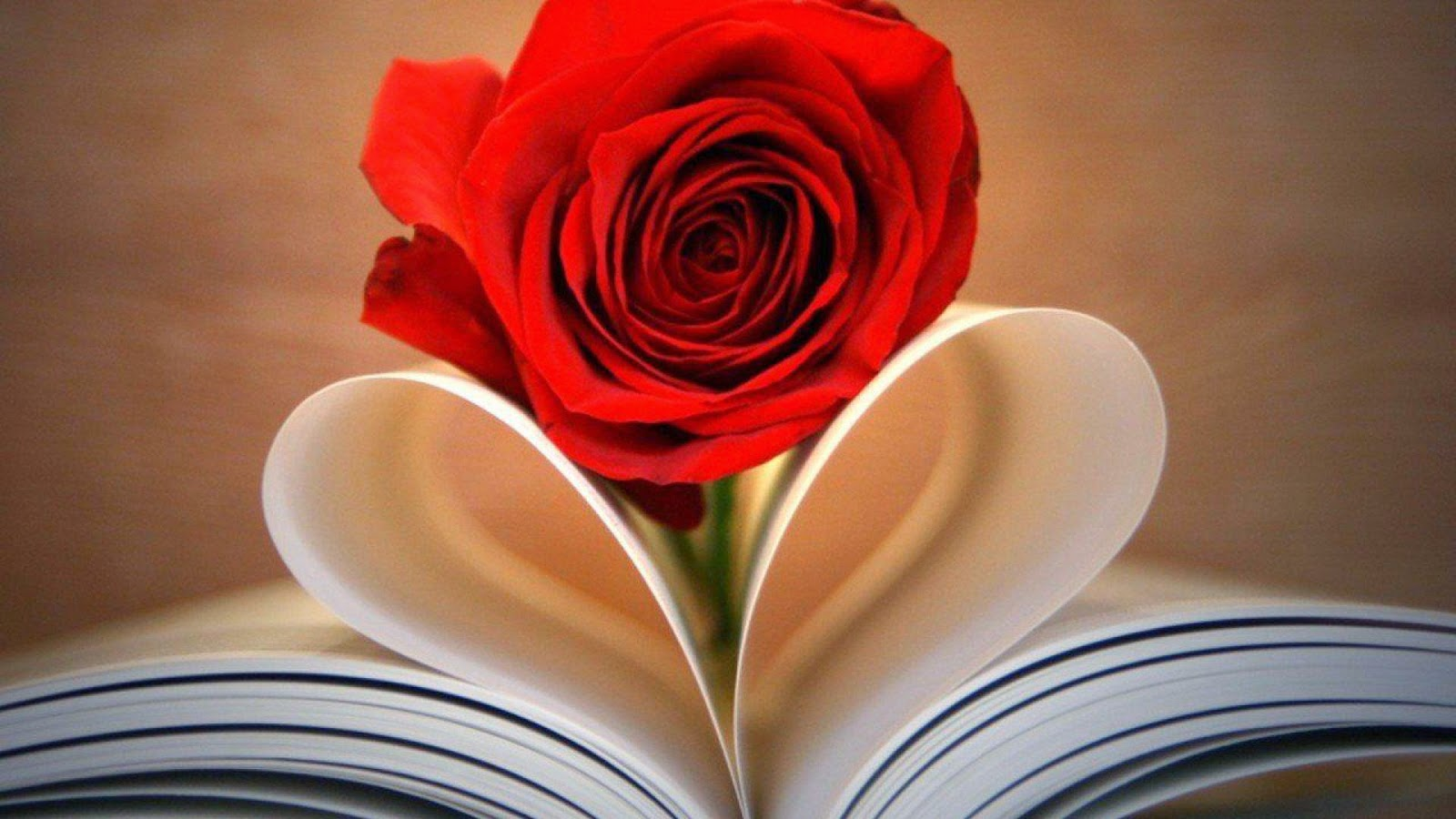 Heart Book and Rose Wallpaper