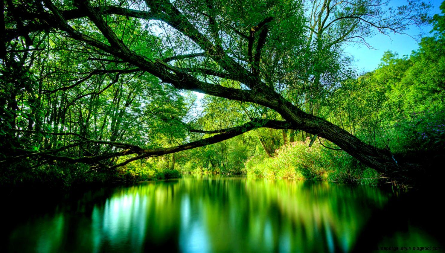 Green Natural Scenery Wallpaper