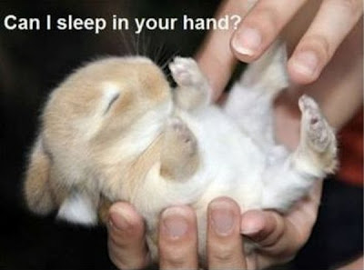 Süßer Hase Can I Sleep in your hand