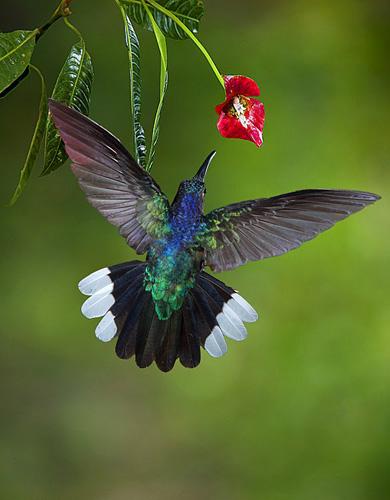 wildlife+photography+birds+%281%29