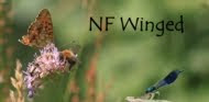 Check out others like this at NF Winged