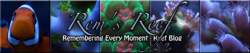 Rem's Reef