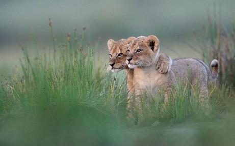 صور للحياة البرية في افريقيا للمصور العالمي Gregoire Bouguereau