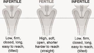 estudio del cervix
