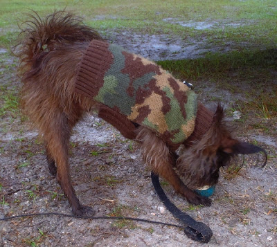 camouflaged dog at three lakes wildlife management in florida by http://DearMissMermaid.com copyright by Dear Miss Mermaid
