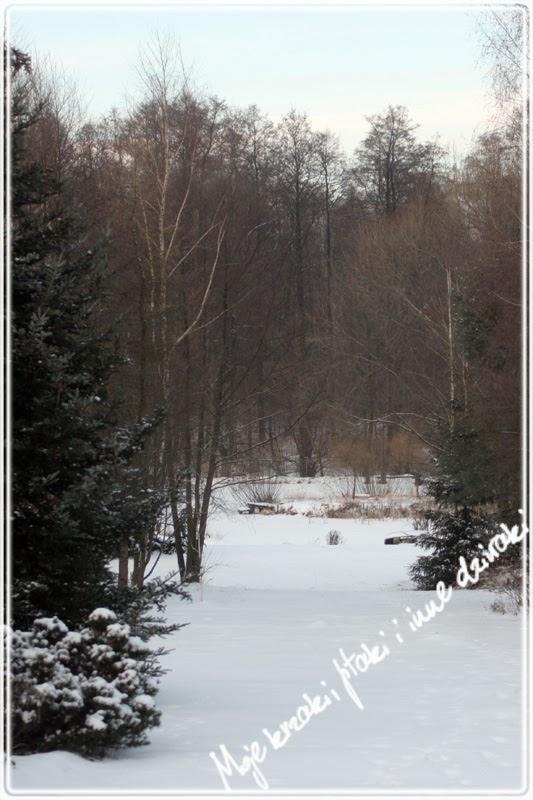 kaczka krzyżówka zimą, napowietrzanie stawu zimą
