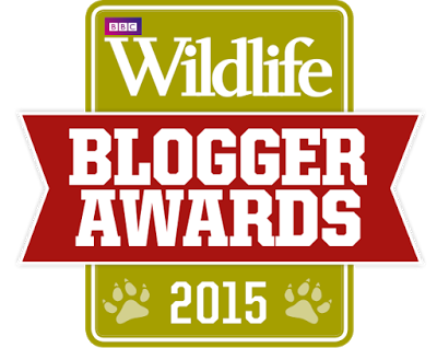 Highly Commended by BBC Wildlife Magazine
