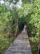 漫步紅樹林